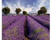 AS Creation XXL Nature 2010 Lavender 0410-12 , 41012  3m...