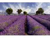 AS Creation XXL Nature 2010 Lavender 0410-14 , 41014  5m...