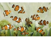 AS Creation XXL Nature 2010 Clownfish 0410-34 , 41034  5m...